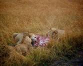 Direction le diamant du Botswana avec safarivo.com